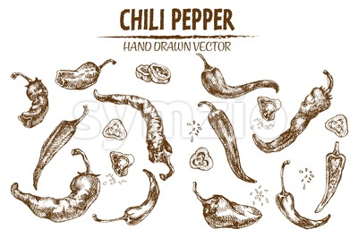 Digital vector detailed line art chili pepeper vegetable hand drawn retro illustration collection set. Thin artistic pencil outline. Vintage ink flat Stock Vector