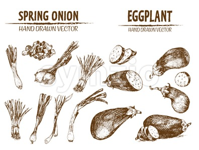 Digital vector detailed line art spring onion and eggplant vegetable hand drawn retro illustration collection set. Thin artistic pencil outline. Stock Vector