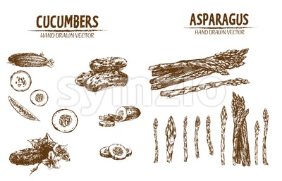 Digital vector detailed line art cucumber and asparagus vegetable hand drawn retro illustration collection set. Thin artistic pencil outline. Vintage Stock Photo