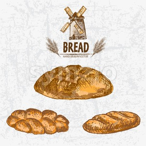 Digital color vector detailed line art golden loaves of round, braided and long bread, wheat hand drawn retro illustration set. Thin outline. Vintage Stock Vector