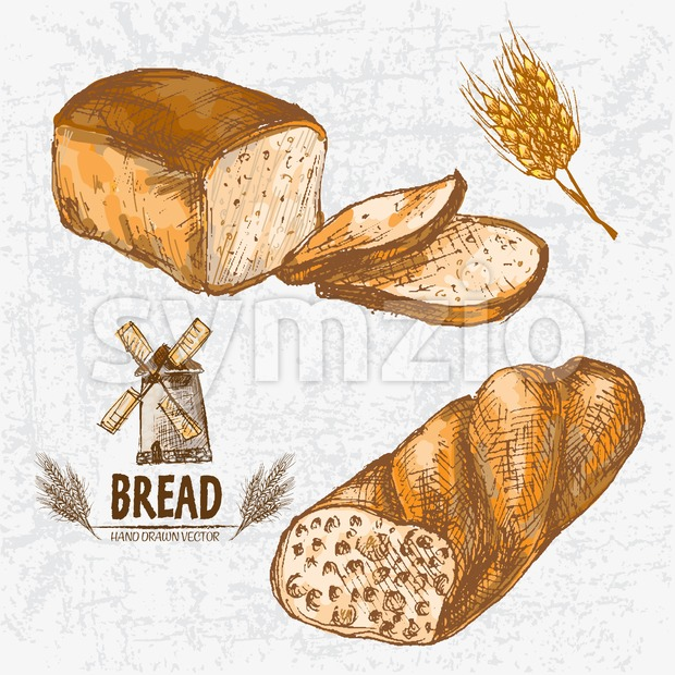 Digital color vector detailed line art golden loaves of white and ciabatta bread, wheat hand drawn retro illustration set. Thin ...