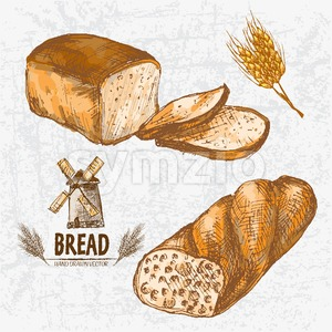 Digital color vector detailed line art golden loaves of white and ciabatta bread, wheat hand drawn retro illustration set. Thin outline. Vintage ink Stock Vector