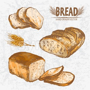 Digital color vector detailed line art golden loaves of rye and ciabatta bread, wheat hand drawn retro illustration set. Thin outline. Vintage ink Stock Vector