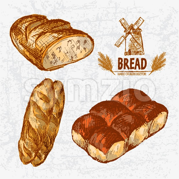 Digital color vector detailed line art golden loaves of white and ciabatta bread, dinner roll hand drawn retro illustration set. ...