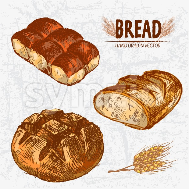 Digital color vector detailed line art golden loaves of round and ciabatta bread, dinner roll hand drawn retro illustration set. Thin outline. Vintage Stock Vector