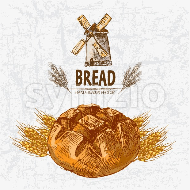 Digital color vector detailed line art golden loaves of round bread and wheat hand drawn retro illustration set. Thin pencil ...