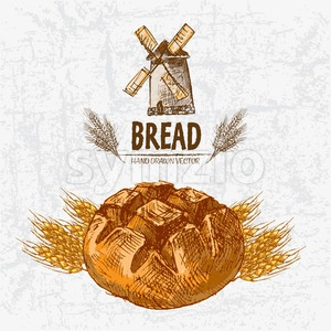 Digital color vector detailed line art golden loaves of round bread and wheat hand drawn retro illustration set. Thin pencil artistic outline. Vintage Stock Vector