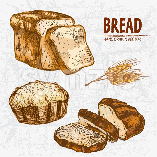 Digital color vector detailed line art golden loaves of white and rye bread, pie with sesame, wheat hand drawn illustration ...
