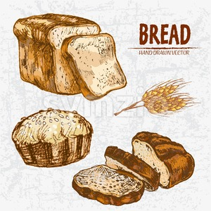 Digital color vector detailed line art golden loaves of white and rye bread, pie with sesame, wheat hand drawn illustration set. Thin outline. Vintage Stock Vector