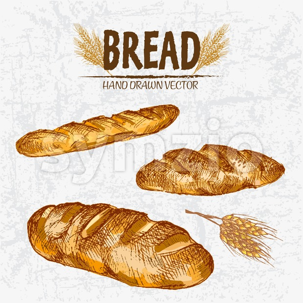 Digital color vector detailed line art golden loaves of white baton and baguette bread, wheat hand drawn retro illustration set. Thin outline. Vintage Stock Vector