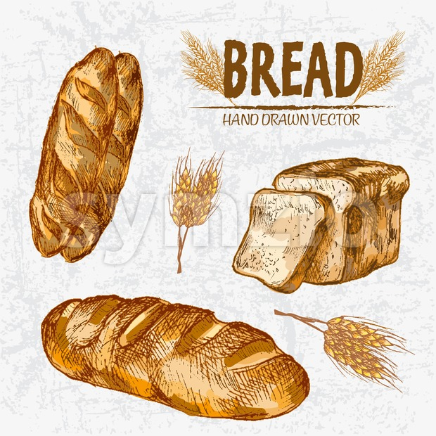 Digital color vector detailed line art golden loaves of white baton and toast bread, wheat hand drawn retro illustration set. ...
