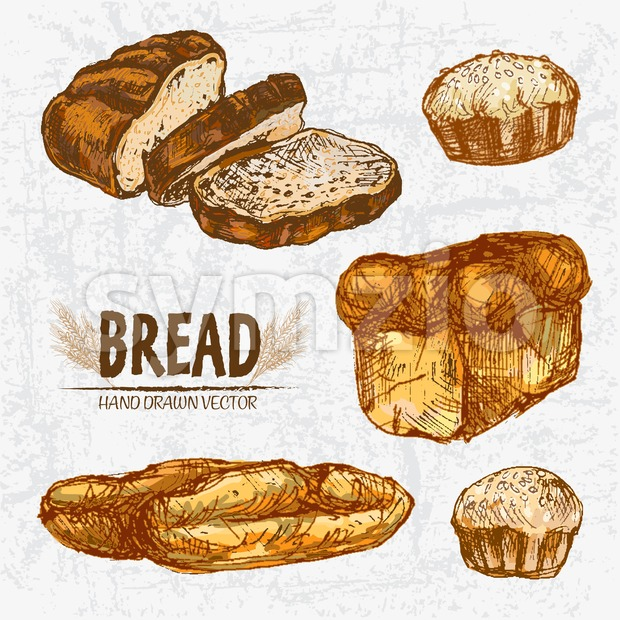 Digital color vector detailed line art golden loaves of white baton and baguette bread, wheat, slices hand drawn retro set. Thin outline. Vintage ink Stock Vector
