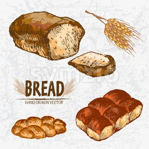 Digital color vector detailed line art golden loaves of rye and braided bread, dinner roll, wheat hand drawn illustration set. Thin outline. Vintage Stock Vector