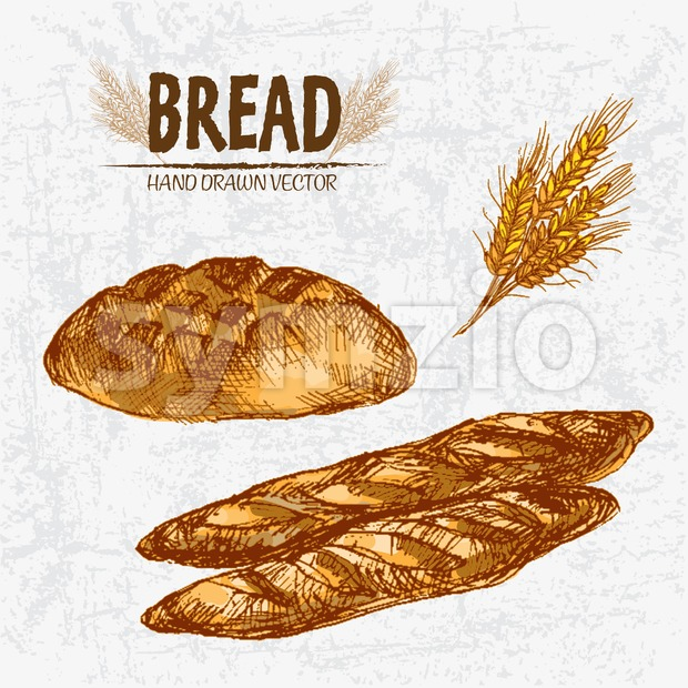 Digital color vector detailed line art golden loaves of round bread and baguettes, wheat hand drawn retro illustration set. Thin ...