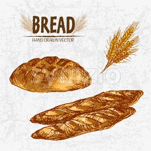Digital color vector detailed line art golden loaves of round bread and baguettes, wheat hand drawn retro illustration set. Thin outline. Vintage ink Stock Vector