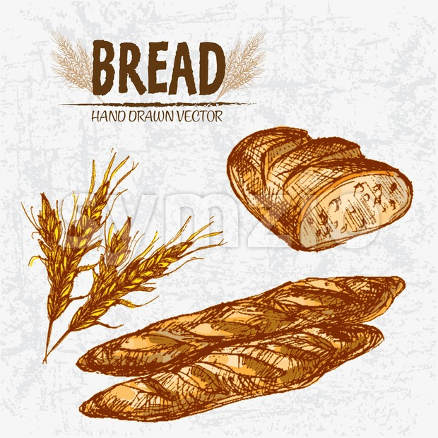 Digital color vector detailed line art golden loaves of ciabatta bread and baguettes, wheat hand drawn retro illustration set. Thin outline. Vintage Stock Vector