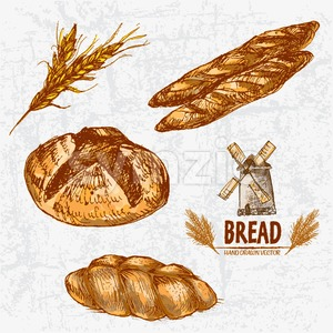 Digital color vector detailed line art golden loaves of round, braided and baguette bread, wheat hand drawn illustration set. Thin outline. Vintage Stock Vector