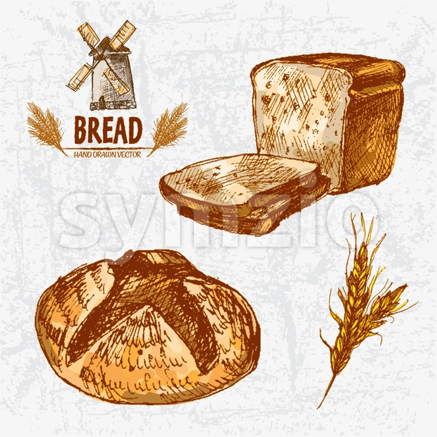 Digital color vector detailed line art golden loaves of round and toast bread, wheat hand drawn retro illustration set. Thin ...