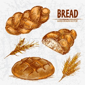Digital color vector detailed line art golden loaves of round and braided bread, wheat hand drawn illustration set. Thin artistic outline. Vintage ink Stock Vector