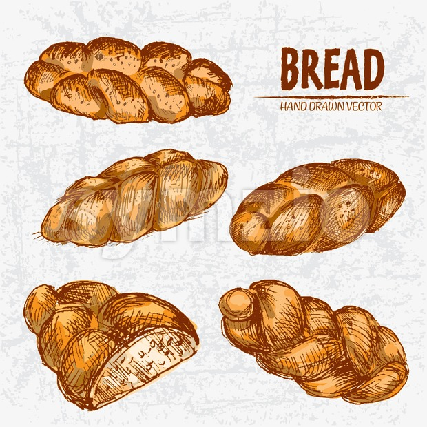 Digital color vector detailed line art golden loaves braided bread, sliced cut, wheat hand drawn illustration set. Thin artistic outline. Vintage ink Stock Vector