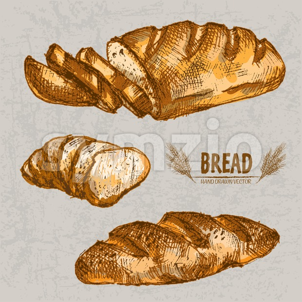 Digital color vector detailed line art golden loaf of white bread, slices and wheat hand drawn retro illustration set. Thin ...