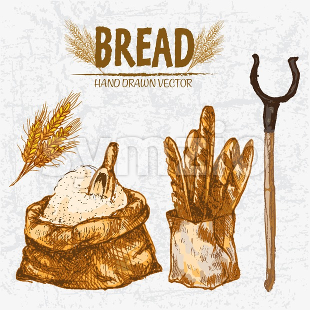 Digital color vector detailed line art golden loaves of baguettes in organic bag, sack with flour and scoop, wheat hand ...