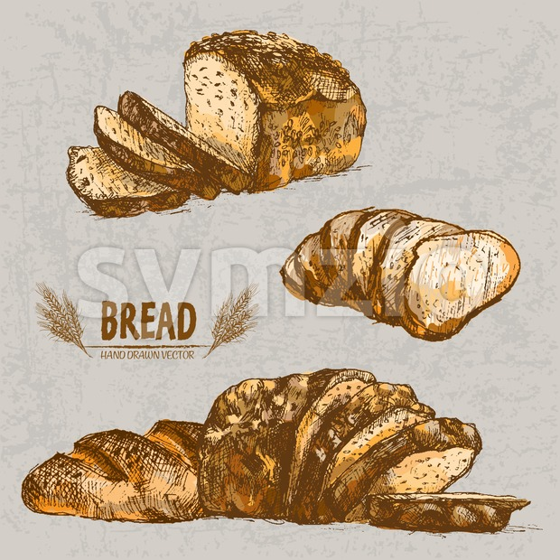 Digital color vector detailed line art golden loaf of dark bread, slices and wheat hand drawn retro illustration set. Thin ...