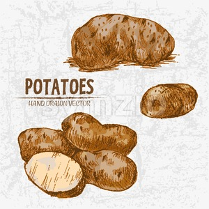 Digital color vector detailed line art golden sliced and whole potatoes hand drawn retro illustration set. Thin pencil artistic outline. Vintage ink Stock Vector