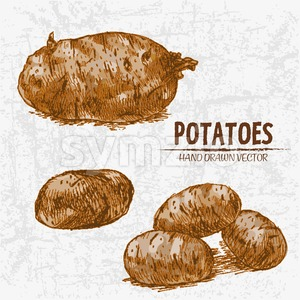 Digital color vector detailed line art golden whole potatoes closeup hand drawn retro illustration set. Thin pencil artistic outline. Vintage ink Stock Vector