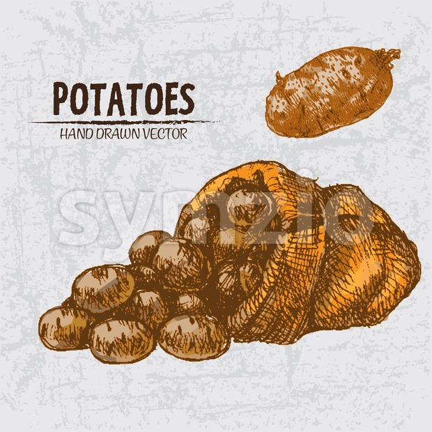 Digital color vector detailed line art golden potatoes falling from organic sack hand drawn retro illustration set. Thin pencil artistic outline. Stock Vector