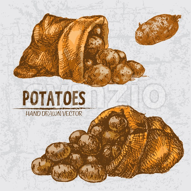 Digital color vector detailed line art golden potatoes falling from organic sack hand drawn retro illustration set. Thin pencil artistic ...