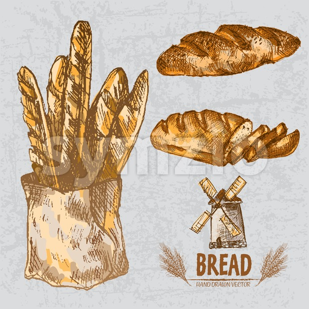 Digital color vector line art golden loaves of long and braided bread, slices, baguettes in organic bag, wheat hand drawn ...