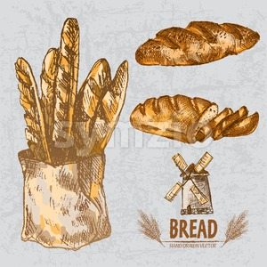 Digital color vector line art golden loaves of long and braided bread, slices, baguettes in organic bag, wheat hand drawn set. Thin outline. Vintage Stock Vector