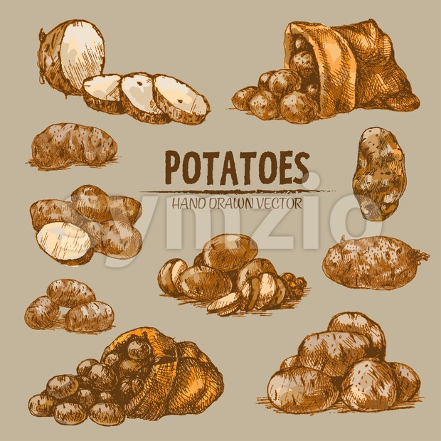 Digital color vector detailed line art golden sliced and whole potatoes, falling from sack hand drawn retro illustration set. Thin pencil outline. Stock Vector