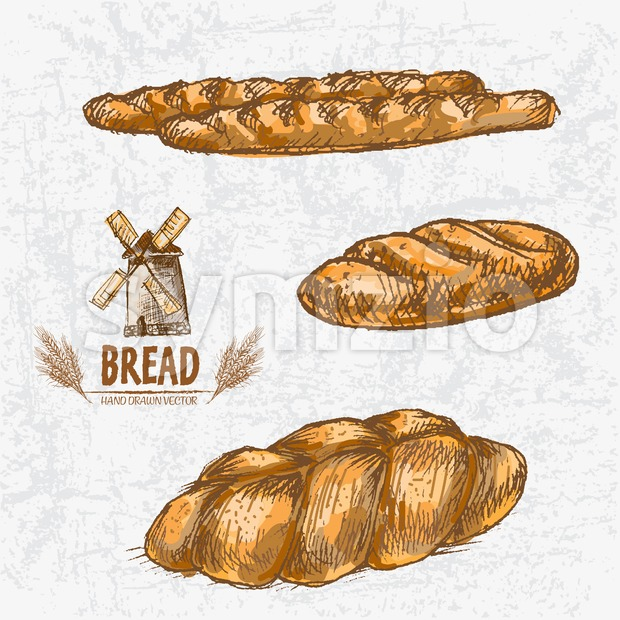 Digital color vector detailed line art golden loaves of baguettes, white and braided bread, wheat hand drawn set. Thin artistic outline. Vintage ink Stock Vector