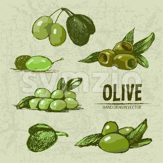Digital color vector detailed line art fresh green and riped olives on branches hand drawn retro illustration set. Thin pencil ...