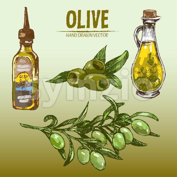 Digital color vector detailed line art fresh green olives on branches, oil pitcher and bottle hand drawn retro illustration set. ...
