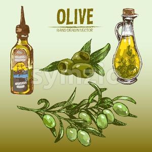 Digital color vector detailed line art fresh green olives on branches, oil pitcher and bottle hand drawn retro illustration set. Thin outline. Vintage Stock Vector
