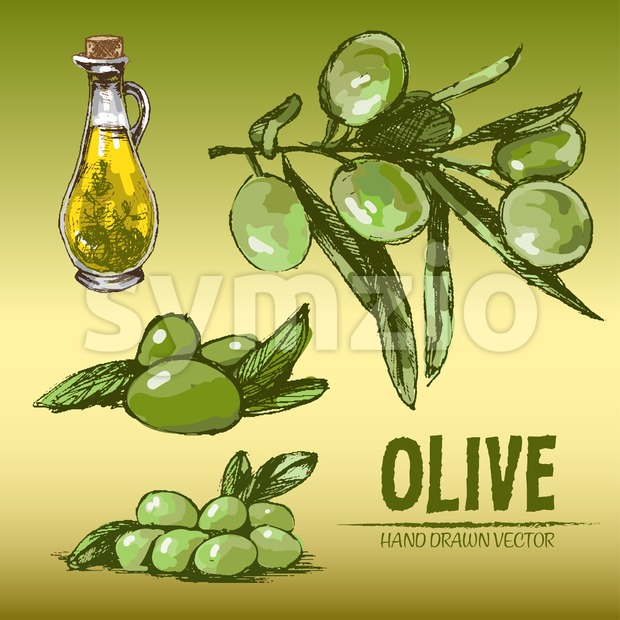 Digital color vector detailed line art fresh green olives on branches and oil pitcher hand drawn retro illustration set. Thin pencil outline. Vintage Stock Vector