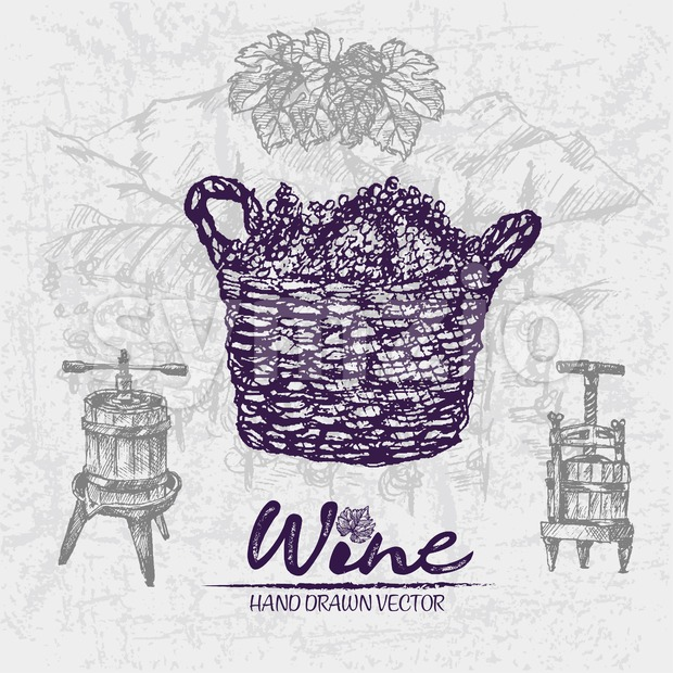 Digital color vector detailed line art grape bunches in wooden braided basket, wine press and leaves hand drawn illustration set. Thin outline. Stock Vector