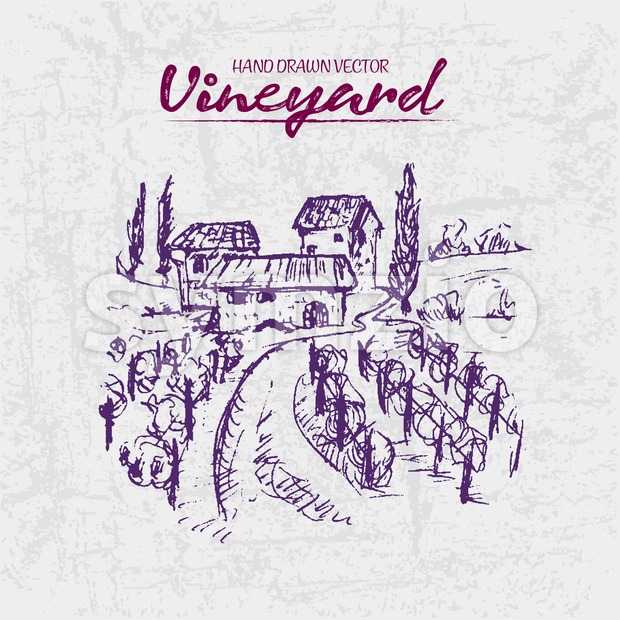 Digital color vector detailed line art purple vineyard fields with buildings and trees hand drawn illustration set. Thin artistic pencil ...