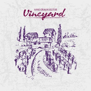 Digital color vector detailed line art purple vineyard fields with buildings and trees hand drawn illustration set. Thin artistic pencil outline. Stock Vector