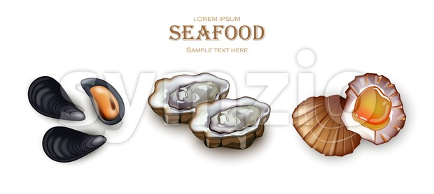 Mussels, Oysters and scallop Seafood Vector. Realistic detailed 3d illustration set collection Stock Vector