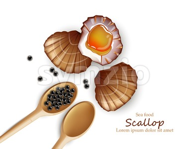 Scallop Vector realistic seafood. Fresh shellfish. 3d detailed illustration Stock Vector