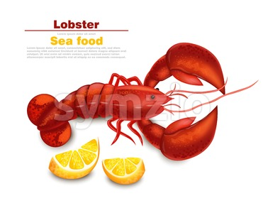 Lobster Vector realistic isolated. Fresh Detailed seafood 3d illustration Stock Vector