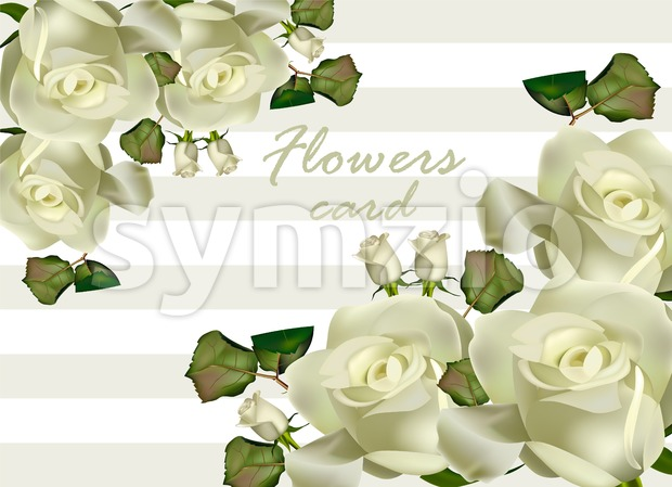 White roses flowers card Vector realistic. Beautiful floral background Stock Vector