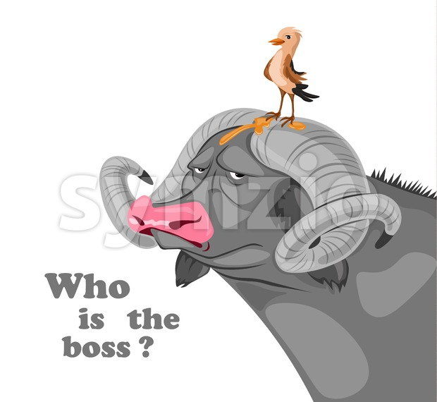 Bird sitting on a buffalo head Vector. Who is the boss concept. Funny comic illustration Stock Vector