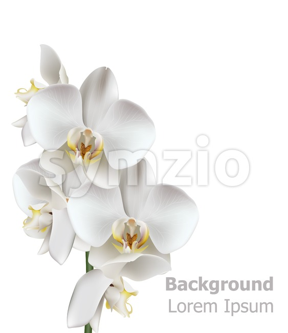 Realistic White orchid flowers Vector. 3d illustration isolated on white Stock Vector