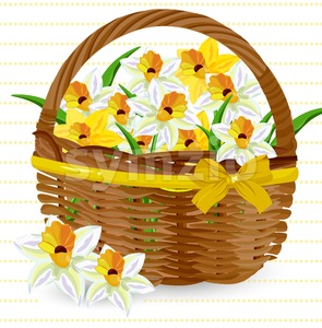 Narcissus flowers in a basket Vector. Floral bouquet decor Stock Vector