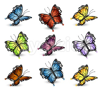 Colorful Butterflies set collection. Vector detailed illlustration Stock Vector